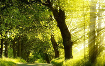 12504-rays-of-light-on-the-road-1920x1080-nature-wallpaper